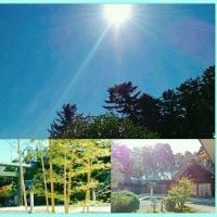 初冬の森の朝❗2016.11.9