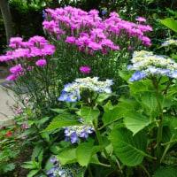 花に恵まれた散歩