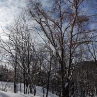 木材にされる森