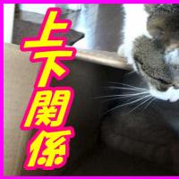 2016.08. CatsDiary 【♀猫こむぎ&♂猫だいずの動画日記】