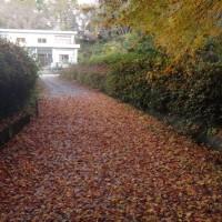 紅葉したモミジが敷き詰められた我家の路