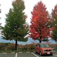 甲府盆地の紅葉