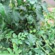 我が家の菜園