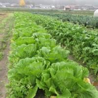 秋冬野菜いっぱいの収穫