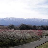 いなべ梅林公園へソロツー(=^・^=)