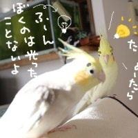 電気記念日(3月25日)
