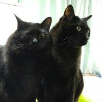 久しぶりに黒猫ニョロニョロ(ΦωΦ)