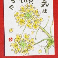 菜の花(絵手紙)