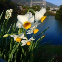 新春の足立山麓
