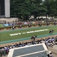 東京競馬場にて競馬三昧