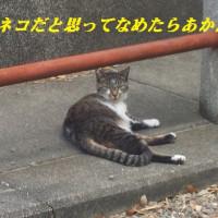 ネコが手を挙げて?横断歩道を渡りました・・・^^;;