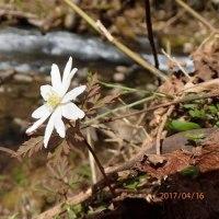 神鍋高原 一つ滝