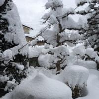 1/16(月)  雪・雪・雪。