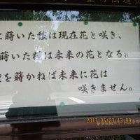 本山詣り・知恩院さんへ。