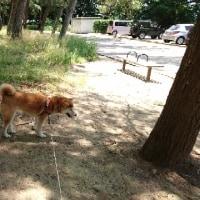 朝散歩は足立公園