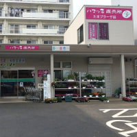 たまプラーザ駅前の「ハマッ子」直売所