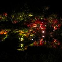 栗林公園のライトアップ