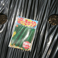 グレープおばさんの畑は・・・胡瓜の種を植えた
