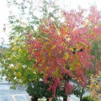 秋の日と大相撲(土井卓美)