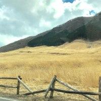 現在の仙石原すすき草原