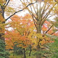 金沢の秋2016-12 兼六園 ⑤ 山﨑山付近―2