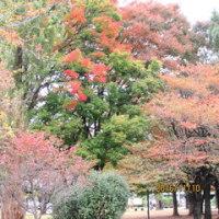 日本語学習 11月14日(月)の学習