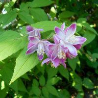 5月庭の花も