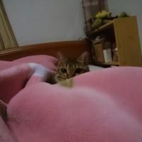 おかんは眠い 猫は遊びたい・・