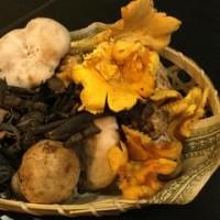 秋のフランスの木茸、まだまだ召し上がって戴けます!