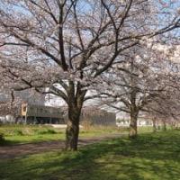 桜を見て思うこと・・・