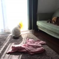 寝る犬と猫