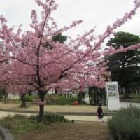 ♫ ♪ 梅は咲いたか 桜はまだかいなぁ ・・・・!!??     № 5,538