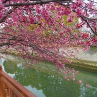 春を訪ねて船橋の夏見・海老川界隈散歩(3/18)