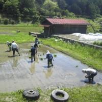 中央アルプス駒ケ岳を遠望しながらお田植え作業