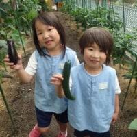 おれんじ 5歳児 枝豆ご飯☆野菜