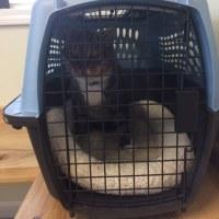 王子を動物病院へ連れていった木曜日