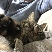 癒してくれるわが家の猫に感謝です♪