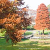 チョコレート色の樹