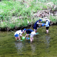 千葉 養老渓谷・大多喜の県民の森ハイキングと玉ねぎ狩り(5月6日)