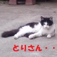 この感覚は大阪オリジナル?いや、違うらしい・・・な話。 =謎が謎を呼ぶ「とりさん」=
