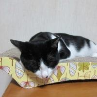 猫と露天風呂の日