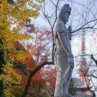 2016.11.26 芝 増上寺; 秋景色 with 観音様 & 東京タワー