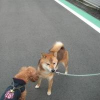 ロクちゃんの朝の散歩