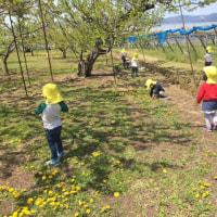 春を探しにお散歩(きく組)