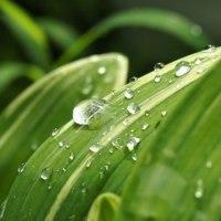雨上がりの庭で・・・雫