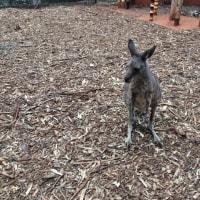 オーストラリアキャンプ33