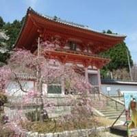 播州清水寺春景色