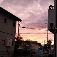 キレイな夕焼けの猫散歩。