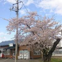 小さな駅の小さな春