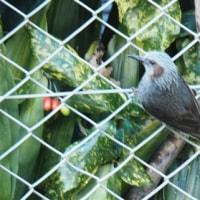 庭に来る鳥